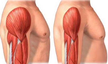 Dianabol e crescita muscolare
